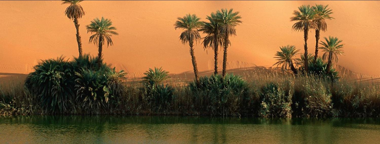 Phoenix Environnement